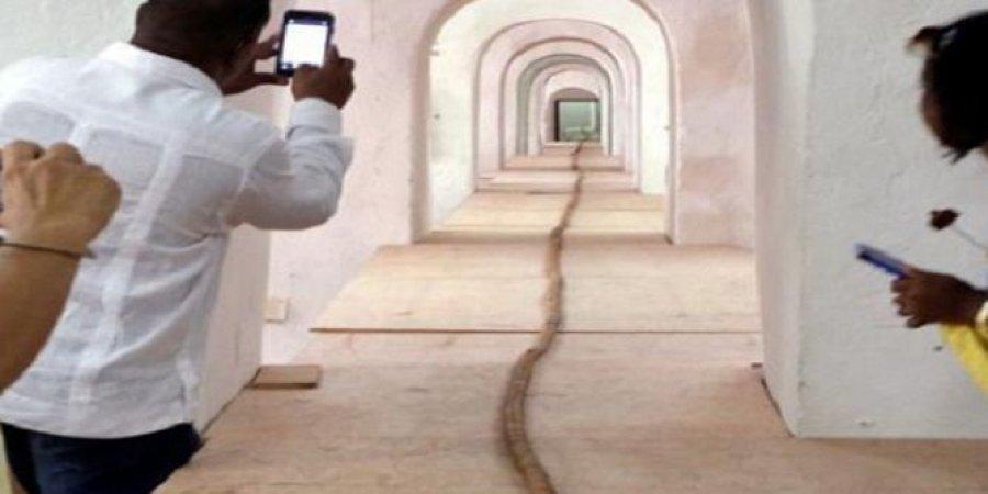 أطول سيجار في العالم.. هدية لكاسترو بعيد ميلاده