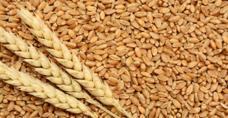 العراق يعلن تحقيق الاكتفاء الذاتي من محصول الحنطة